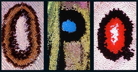 5+Kjell+Sandved+-The+Butterfly+Alphabet