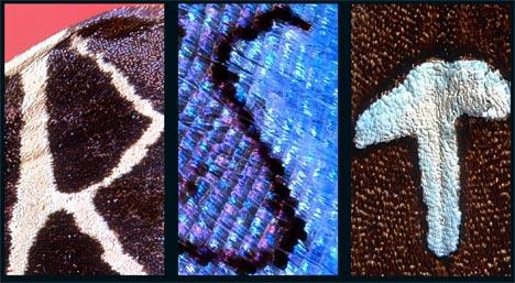 6+Kjell+Sandved+-The+Butterfly+Alphabet