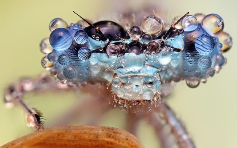 cap de insecta cu picături de apă