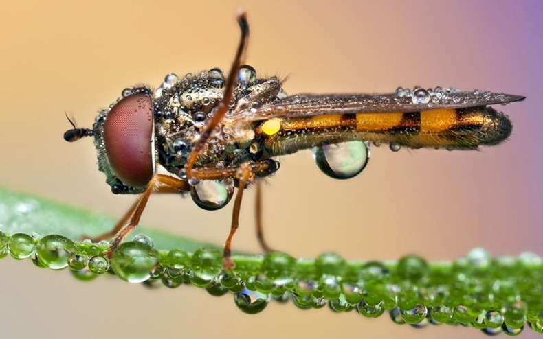 insecta după ploaie