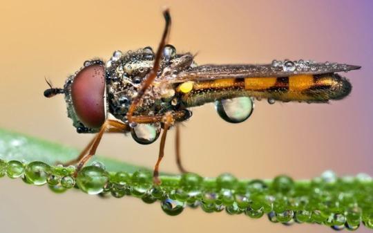 fotografii-insecte-macro
